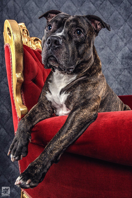 Royal Dogs - Bikkel