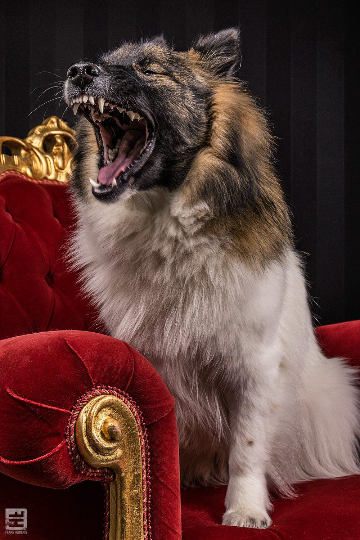 Royal Dogs - Fleur