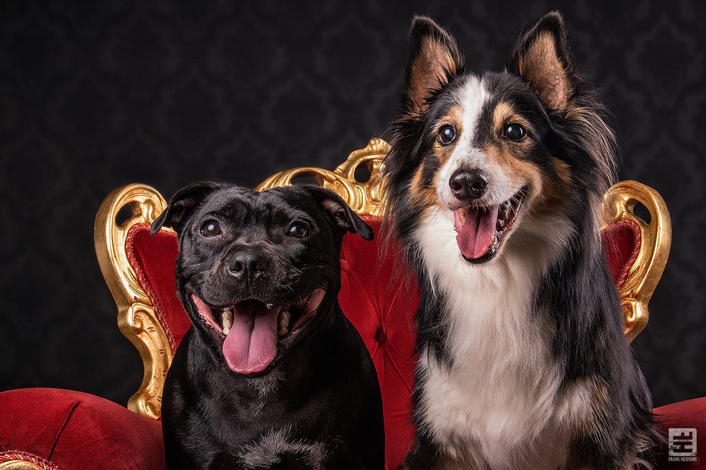 Royal Dogs - Dasha & Iris