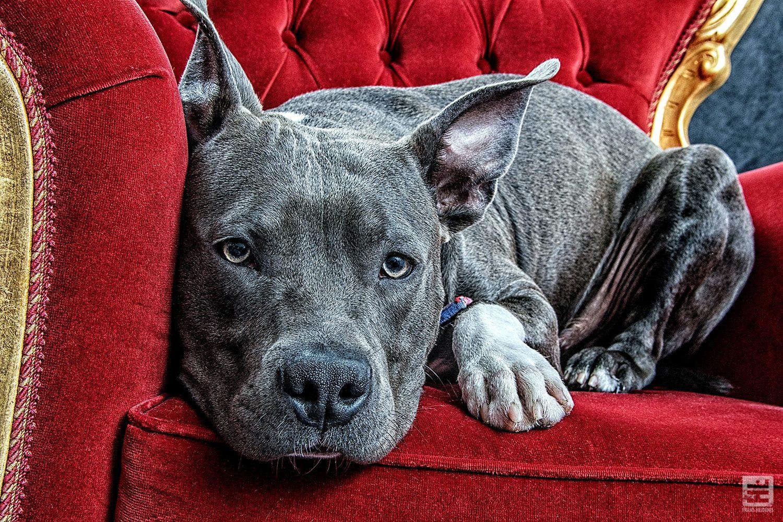 Royal Dogs - Jaino