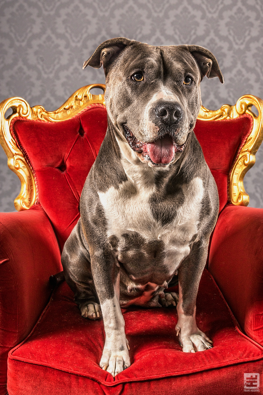 Royal Dogs - Maika