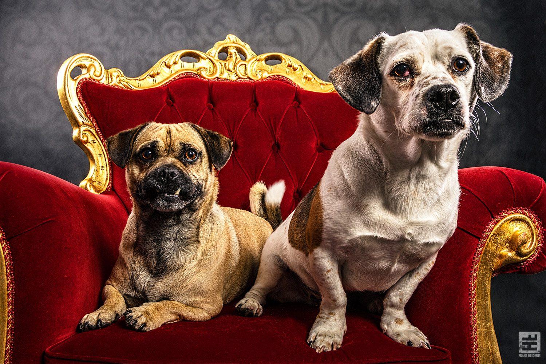 Royal Dogs - Diesel & Morris