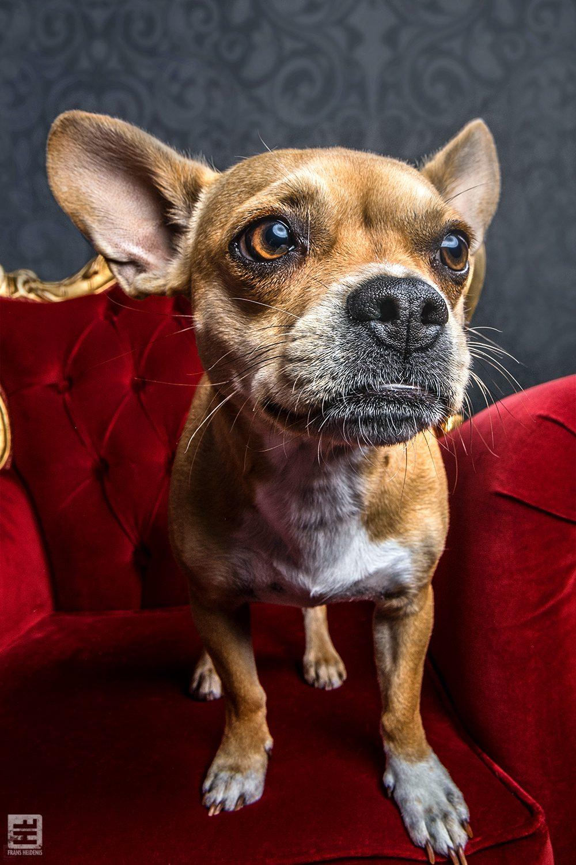 Royal Dogs - Reus