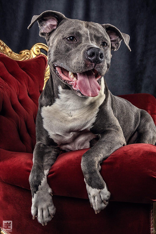 Royal Dogs - Thyson