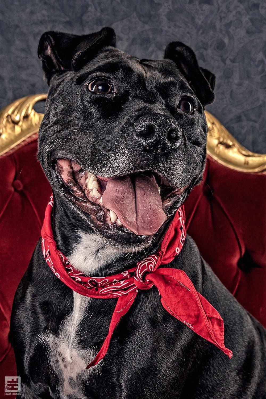 Royal Dogs - Bo