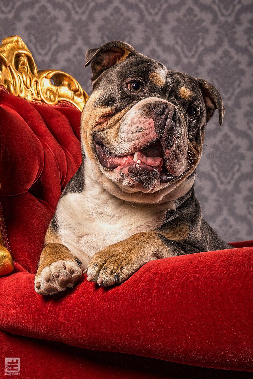 Royal Dogs - Boeddha