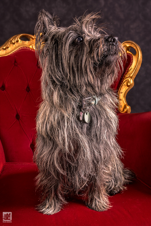 Royal Dogs - Chika