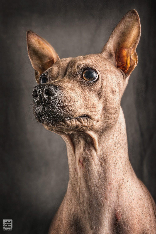 Royal Dogs - Fazer