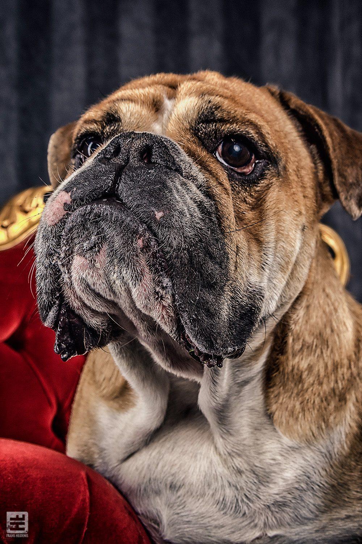 Royal Dogs - Gerrit