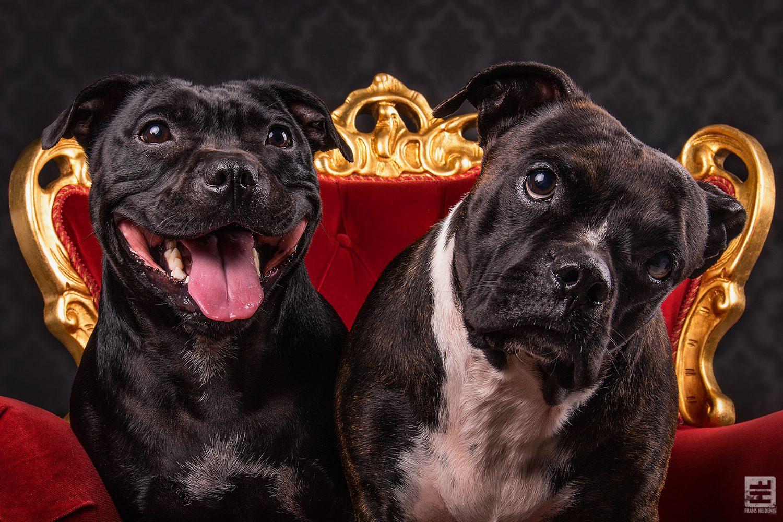 Royal Dogs - Dasha & Bindi