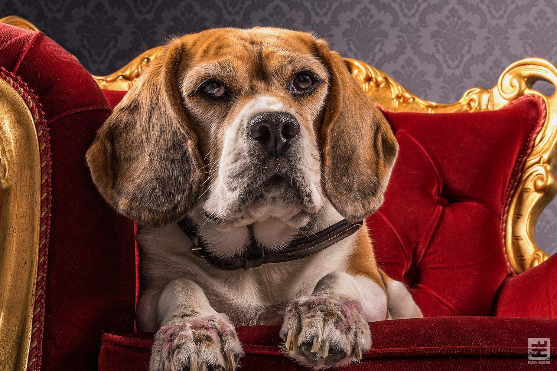 Royal Dogs - Lara