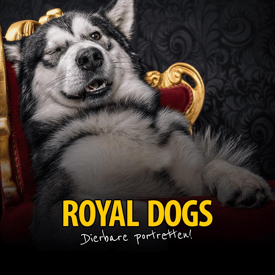 Pre_RoyalDogs