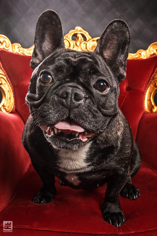 Royal Dogs - Puk