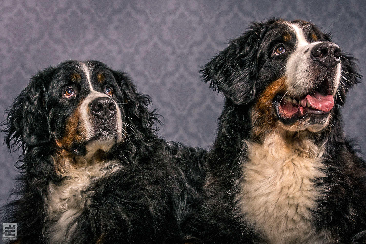 Royal Dogs - Ziva & Hennes